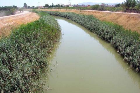 El río Segura a su paso por el Rincón de Beniscornia.