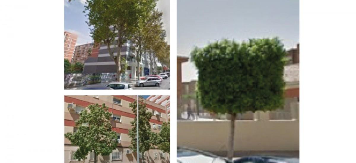 La muy rentable decisión de plantar árboles en nuestras ciudades