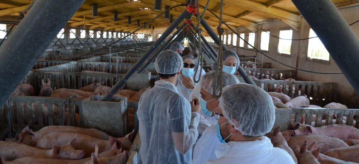 La Comunidad encarga a investigadores de la UPCT un Plan de adecuación ambiental de las explotaciones porcinas de la cuenca del Mar Menor