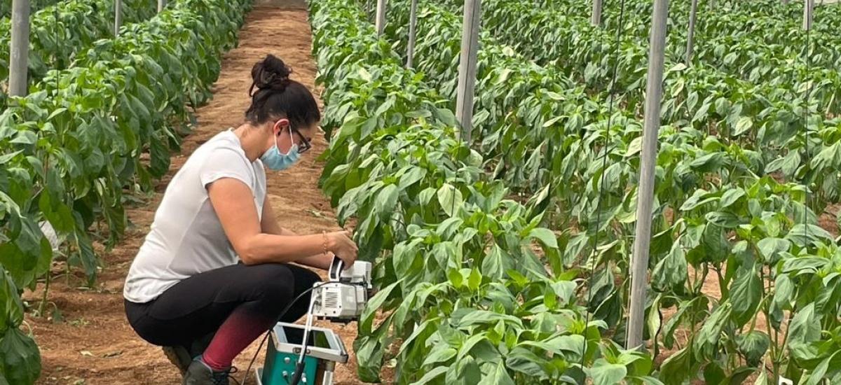 Clases online y prácticas opcionales en el nuevo curso de especialización en fertirrigación sostenible