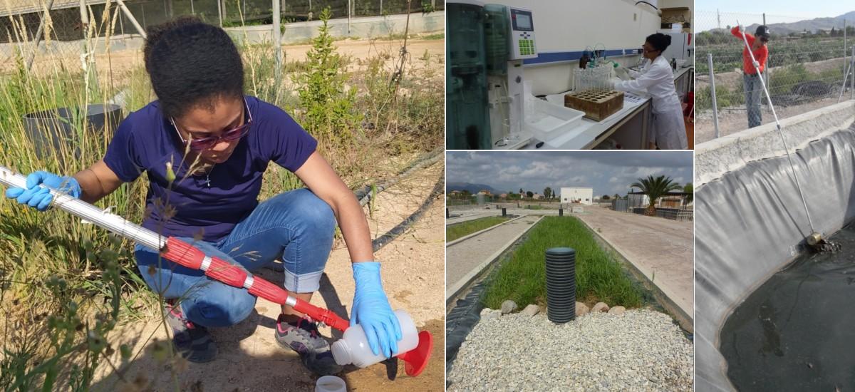 Una tesis prueba que los humedales artificiales para tratar los purines reducen los riesgos ambientales